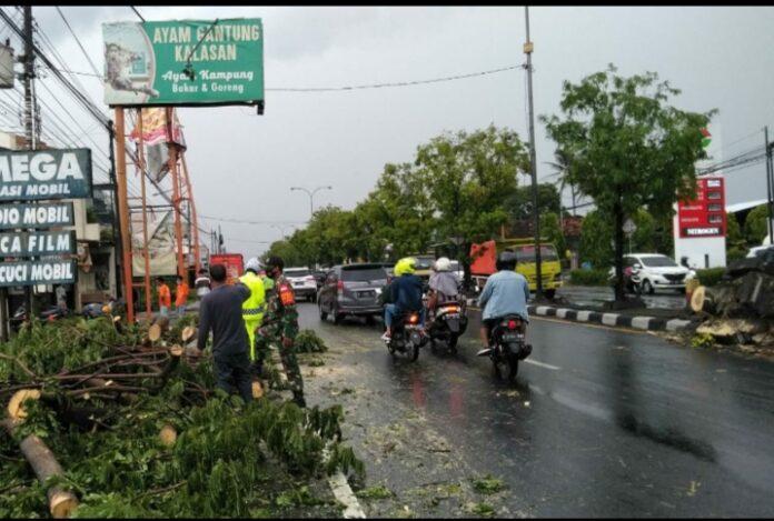 Petugas sedang mengevakuasi pohon yang tumbang dipinggir jalan akibat hujan dan angin kencang menghantam sebagian wilayah Yogyakarta, Jumat (30/10/2020)