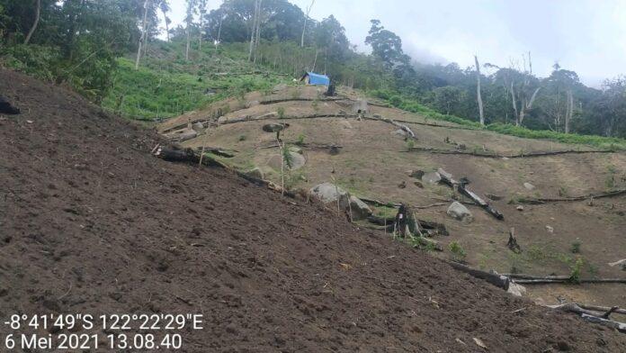 Lokasi hutan di dua desa Kloangpopot dan Wolomotong Kecamatan Doren Kabupaten Sikka yang rata dibabat untuk dijadikan kebun oleh masyarakat. / istimewa