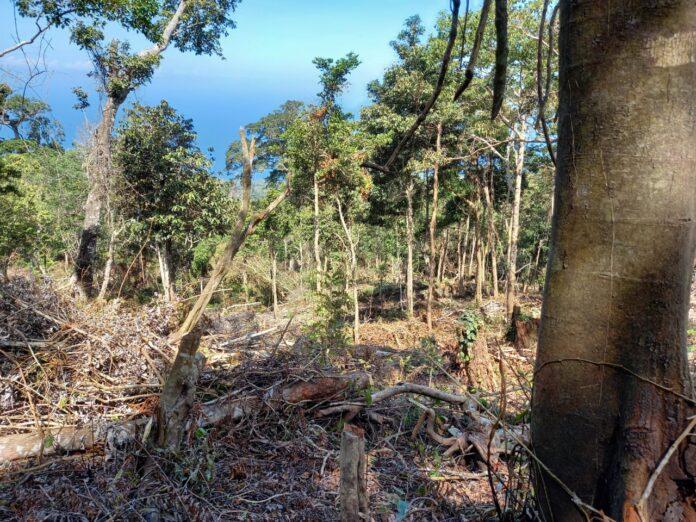 ondisi hutan yang rusak akibat penebangan pohon secara liar yang berada di Kedua Desa yaitu Desa Kloangpopot dan Wolomotong Kecamatan Doreng Kabupaten Sikka NTT. Foto: Istimewa